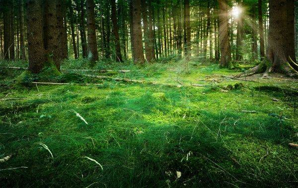 Встреча восхода солнца в лесу - Stone Forest