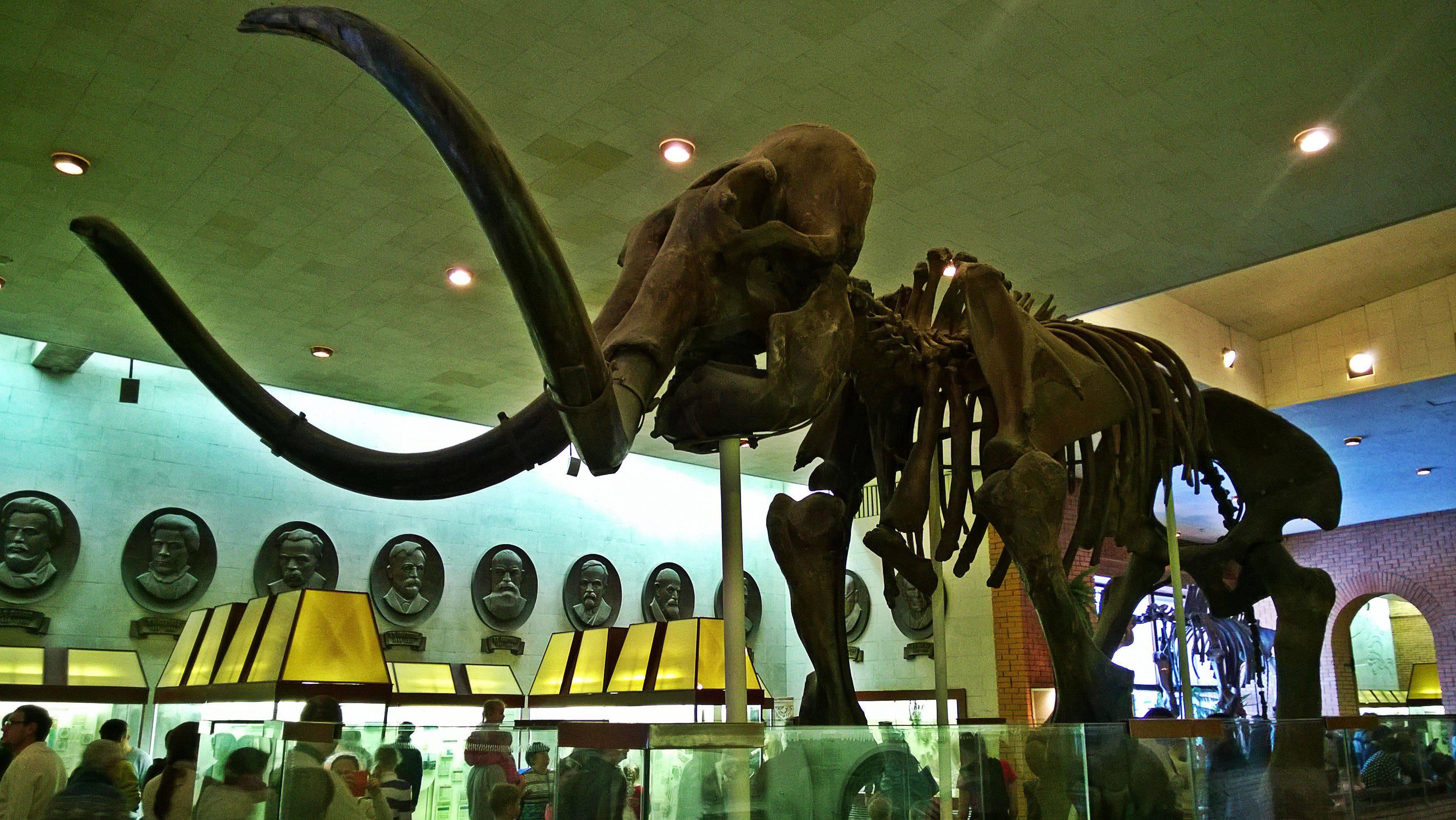 Знакомство-с-динозаврами-в-Москве-3