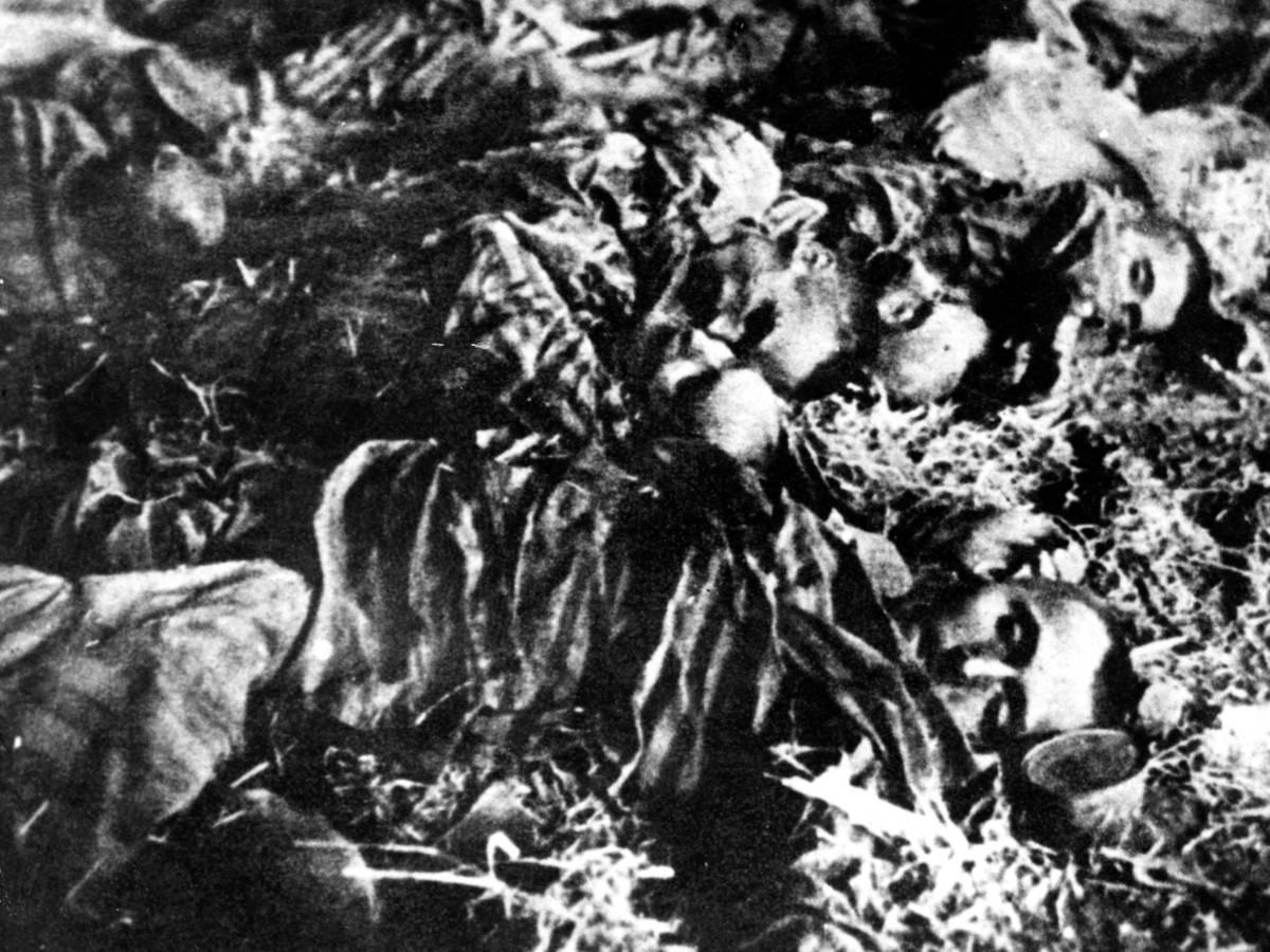 Концентрационный-лагерь-Аушвиц-каким-его-увидела-Красная-Армия-8