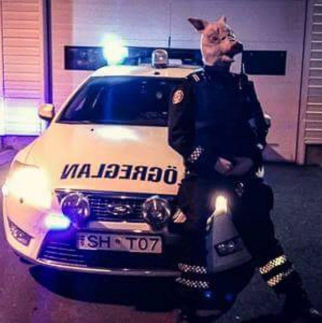 Instagram-исландских-полицейских-6