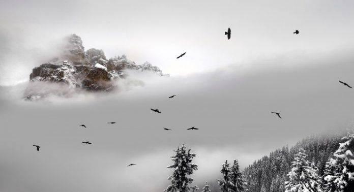 Доломитовые Альпы - Stone Forest