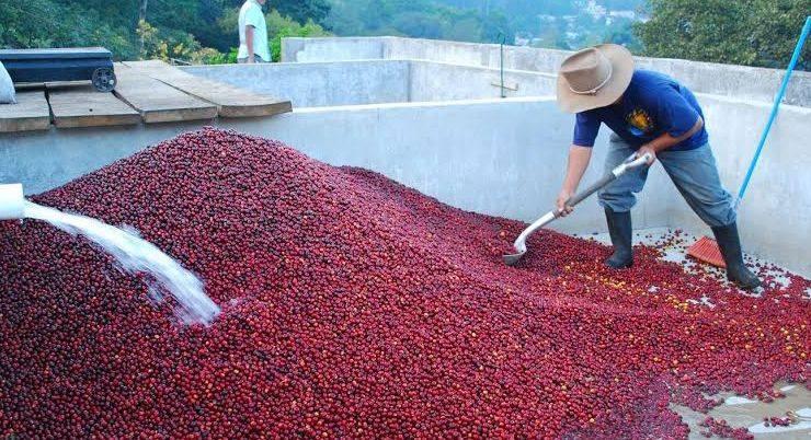 Способы обработки кофе - Stone Forest