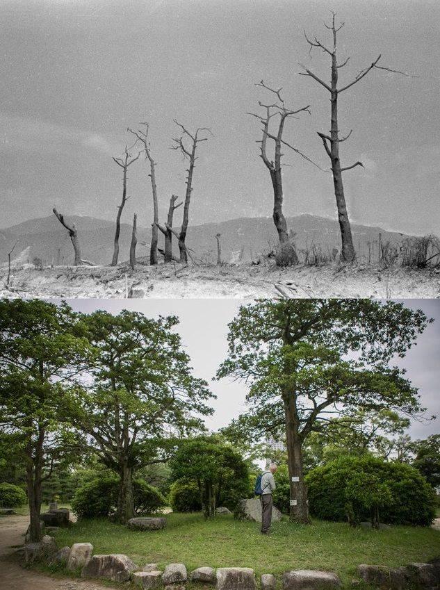 Фотографии Хиросимы - Stone Forest