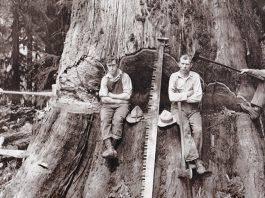 Фотографии дровосеков США - Stone Forest