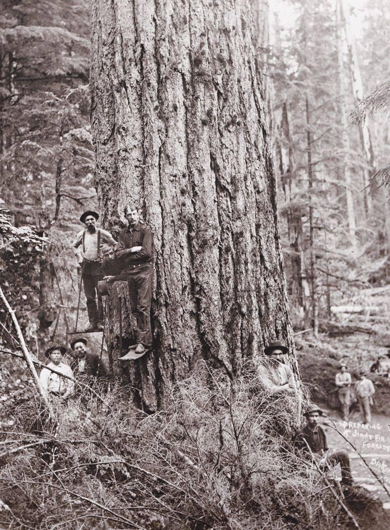Фото дровосеков США - Stone Forest