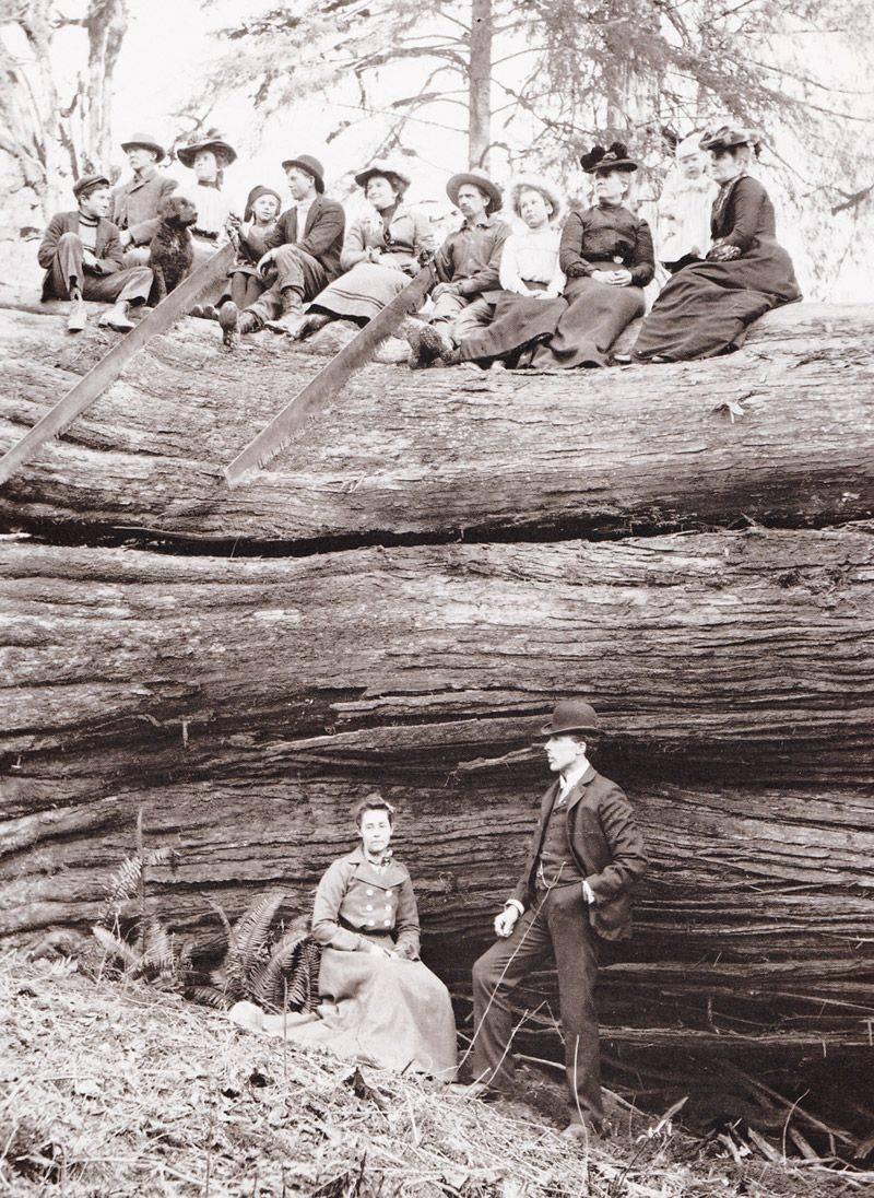 Дровосеки США - Stone Forest