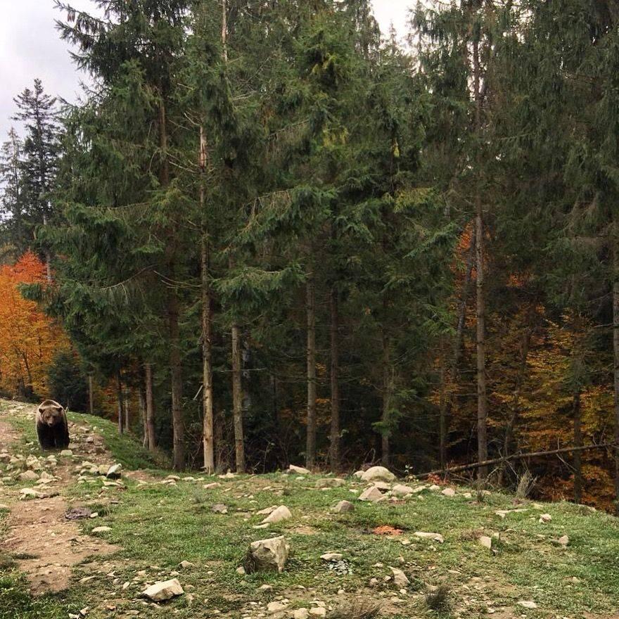 Путешествие в Закарпатье Западная Украина фото - Stone Forest
