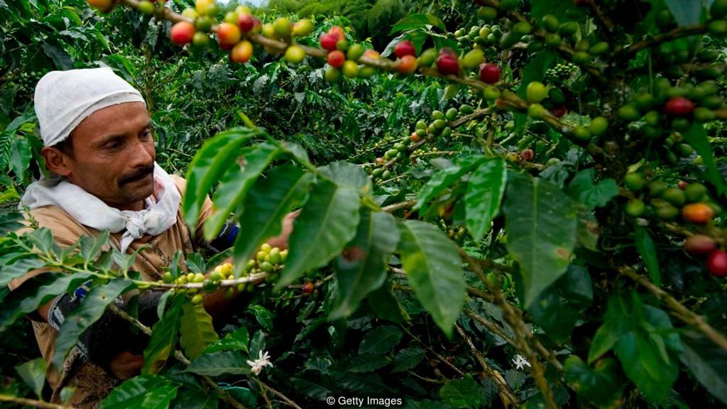 Колумбия является третьим по величине производителем кофе в мире
