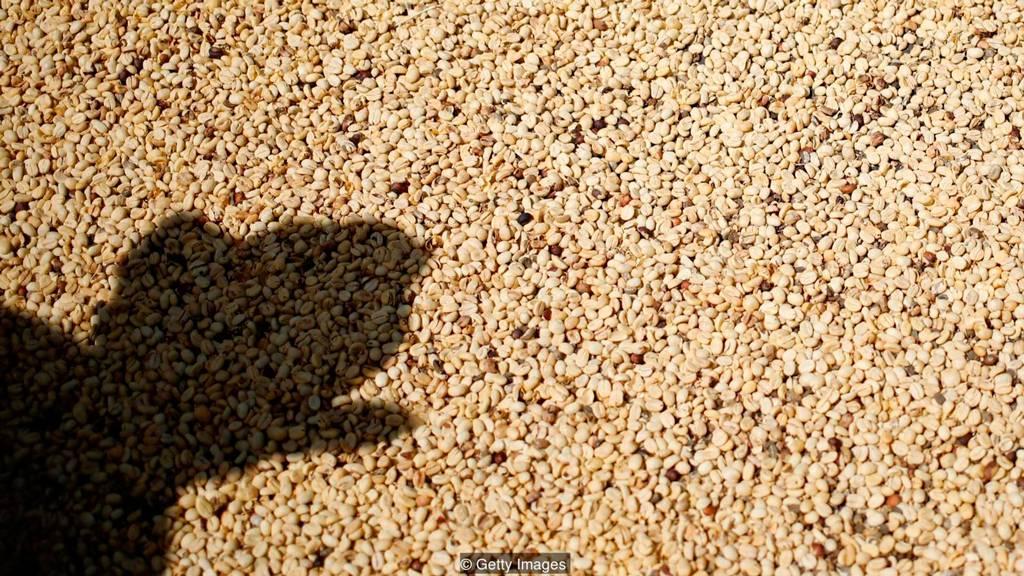 Фермеры должны сосредоточиться на мелких деталях ,чтобы получить высшую оценку качества кофе