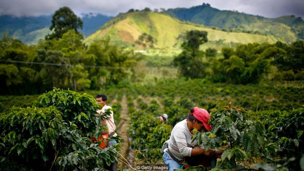 В кофейной промышленности Колумбии занято около 730 000 человек, большинство из которых живет в социально- неблагополучных сельско-хозяйственных районах страны