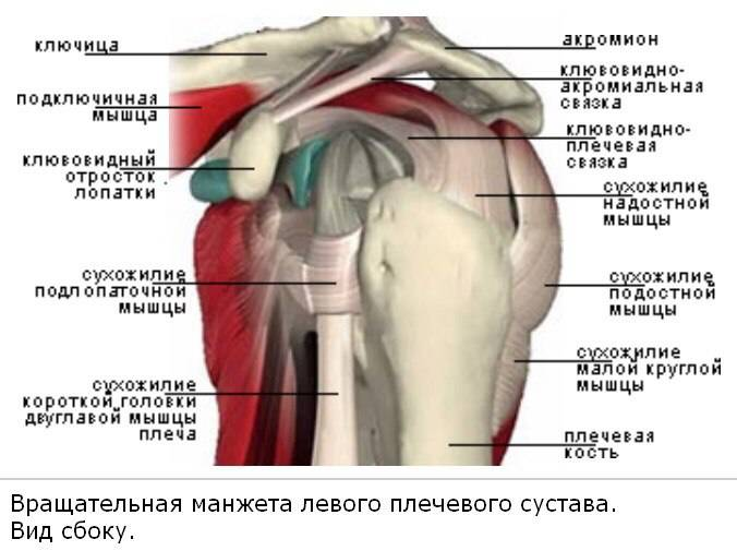 Травмы плечевого сустава у пловцов thumbnail