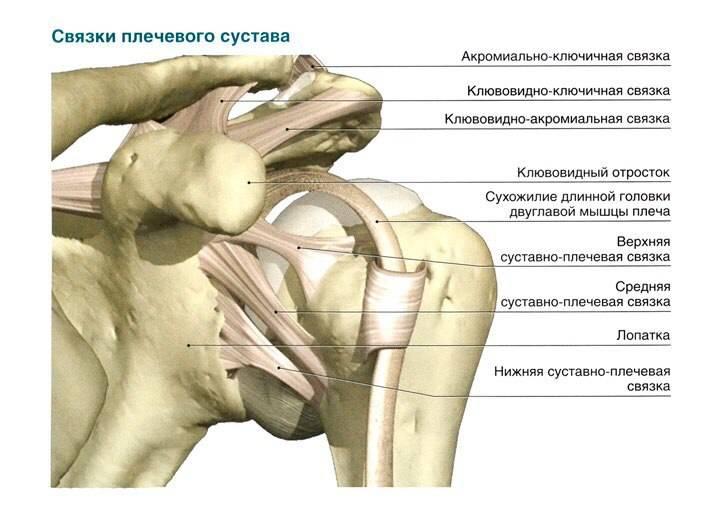плечо пловца травмы в плавании Василий Строганов stoneforest