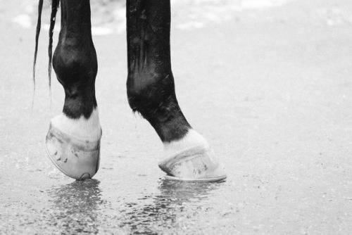 Скачки на лошадях - Stone Forest