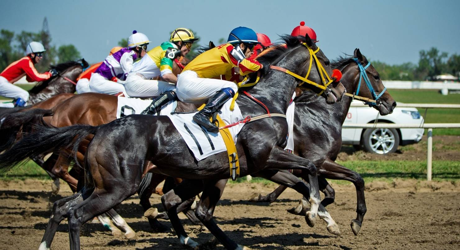 Ставки на спорт на лошадях бесплатный реальный прогноз ставок на сегодня