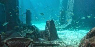 Остров Атлантида - Stone Forest