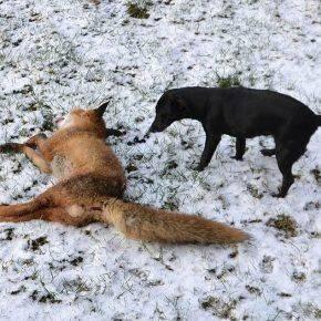 Зимняя Охота на лису - Stpne Forest