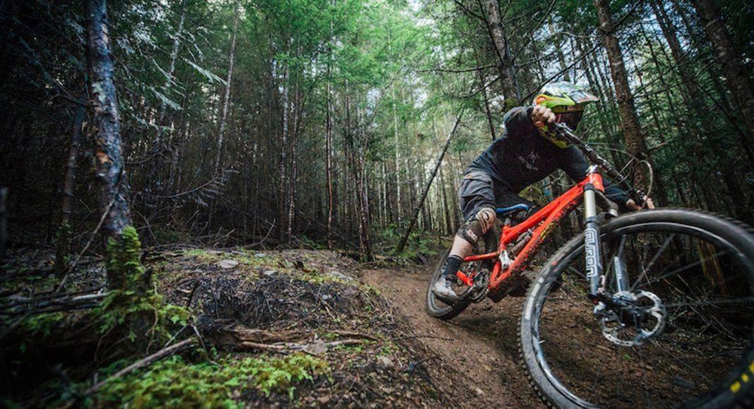 Майк Хопкинс - Каменный лес Stone Forest