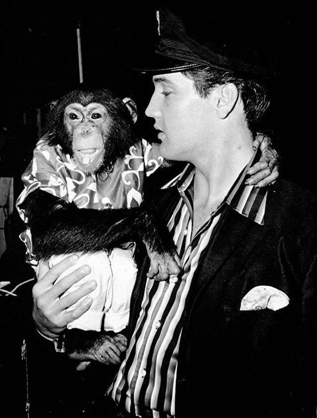 Элвис Пресли с обезьяной - Каменный лес Stone Forest