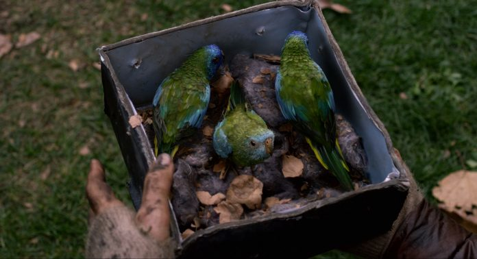 Птичий короб фильм - Каменный лес Stone Forest