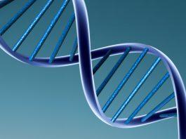Зачем мужчины делают тест ДНК - Каменный лес Stone Forest