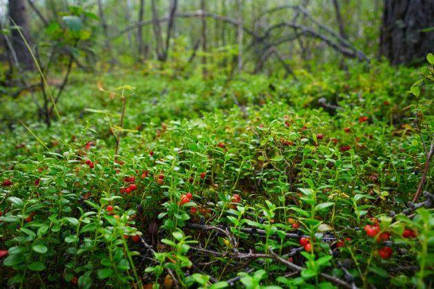 Путешествие на Плато Путорана - Каменный лес Stone Forest